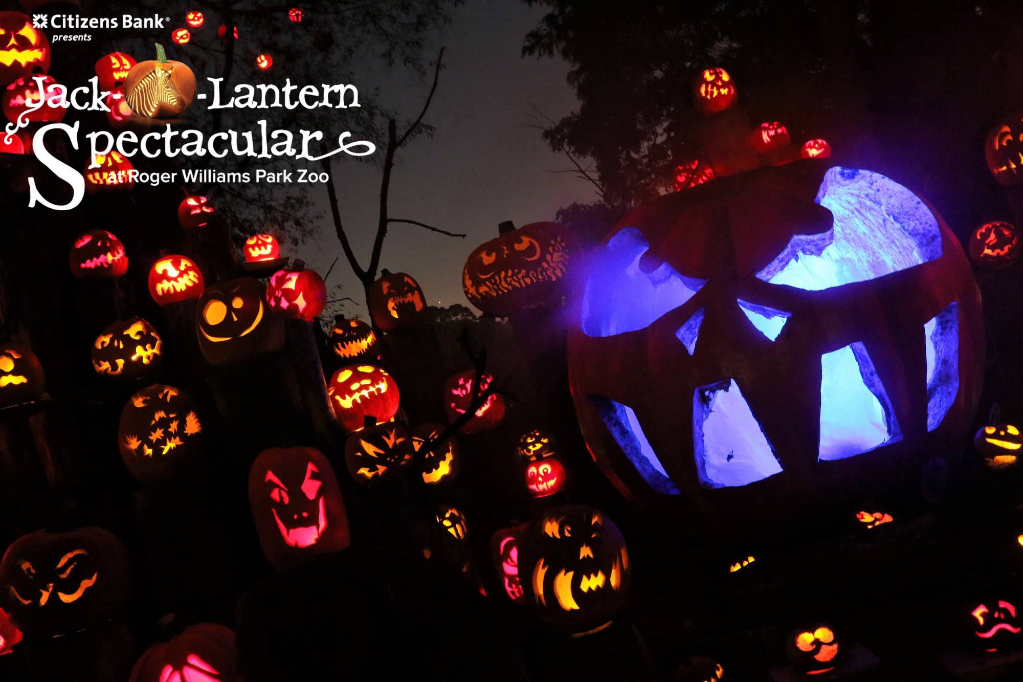 7 tips for the jack-o-lantern spectacular | roger williams park zoo